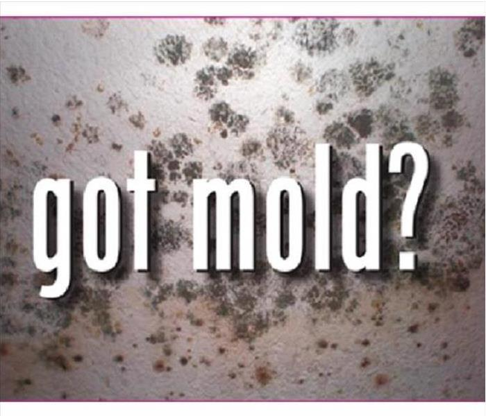 Got Mold? written across the image with mold in the background